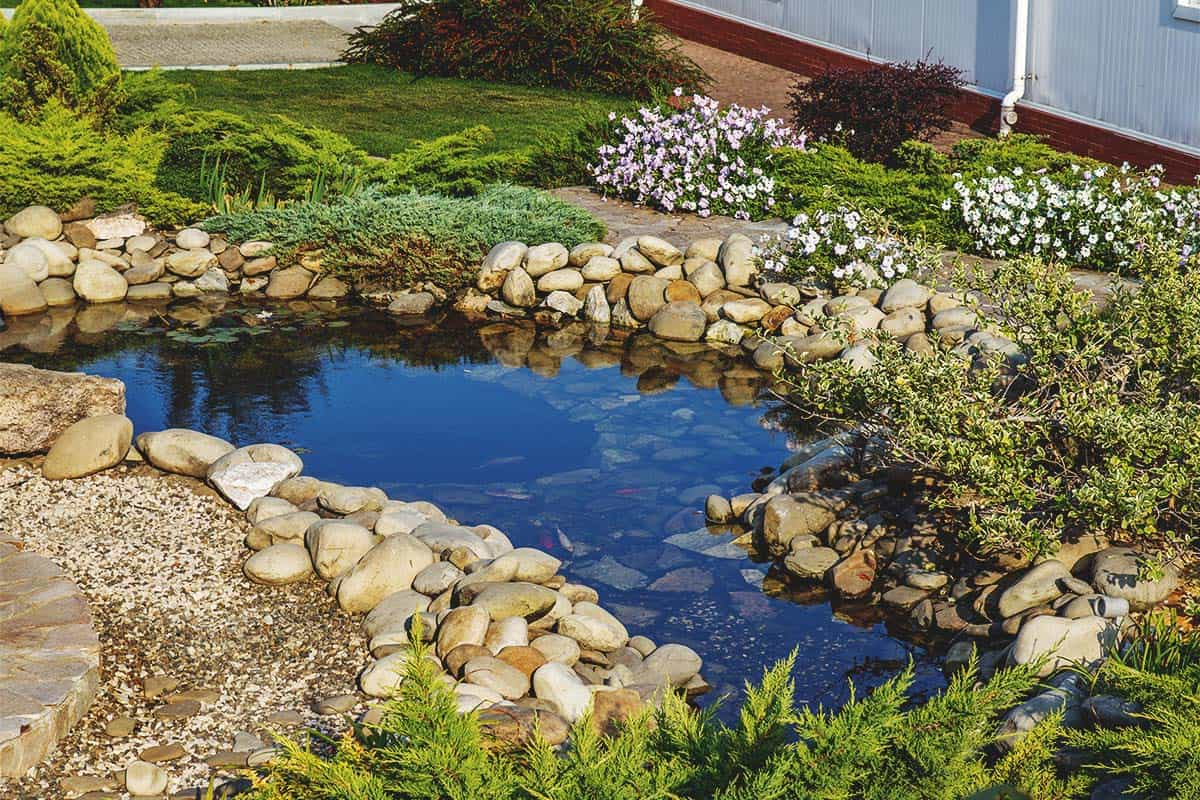 Building a Backyard Pond