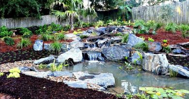 Building a Backyard Pond
